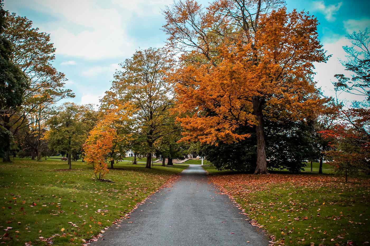 Fall in Kew Gardens