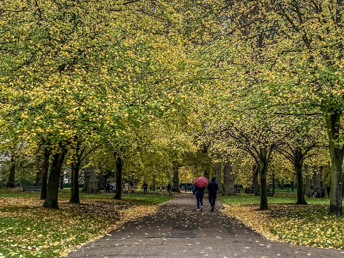 Taken over by fall, London's Green Park