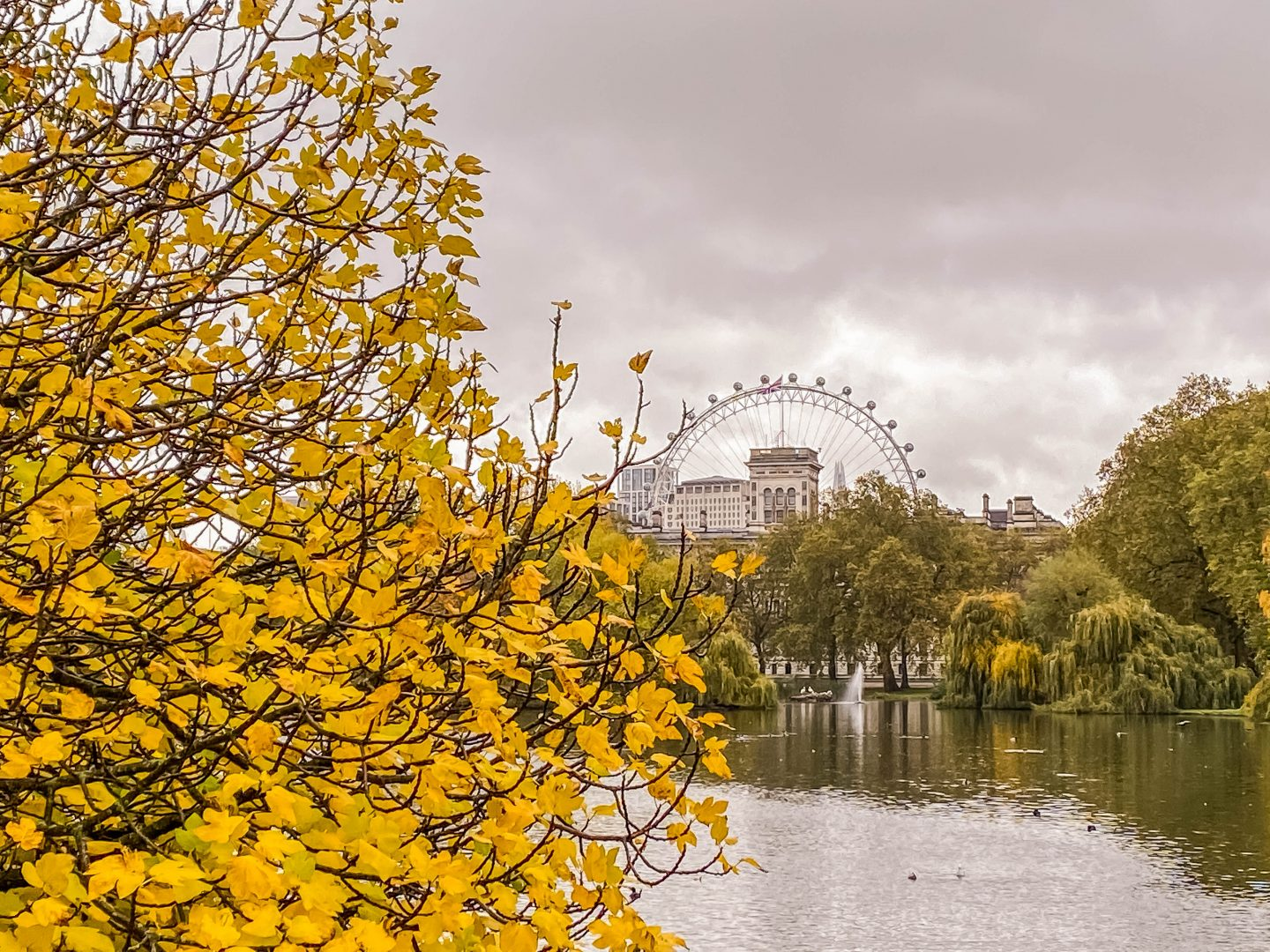 Autumn walks in St James Park